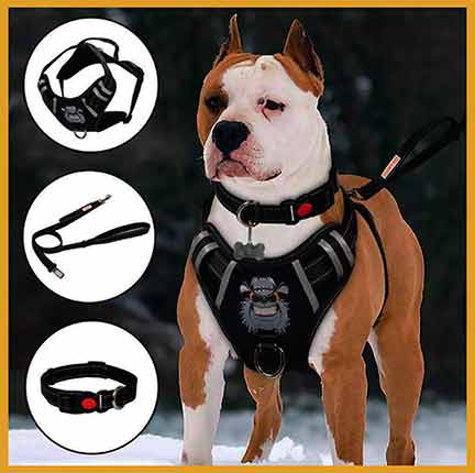 Top 20 Best Dog Harness Review | FAQs | Buying Guide of 2020
