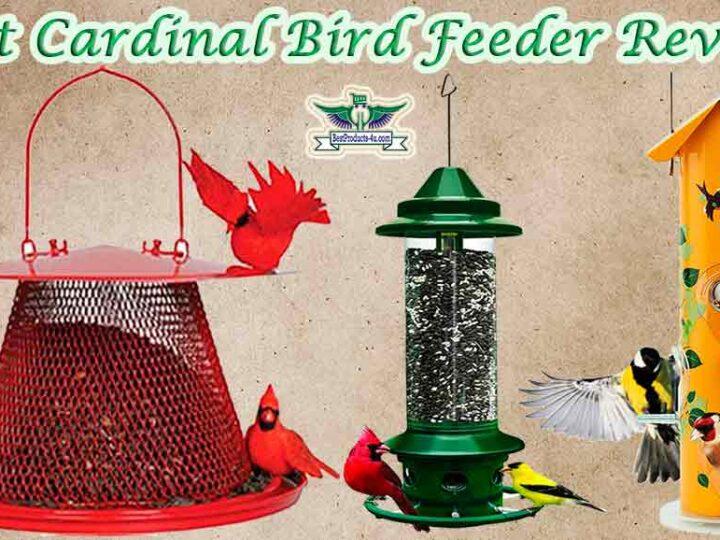 7 Best Cardinal Bird Feeder Reviews
