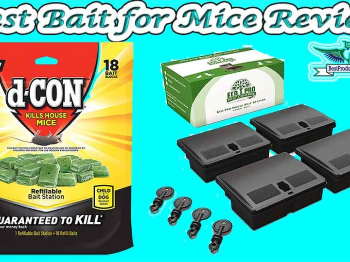 10 Best Bait for Mice Review of 2021